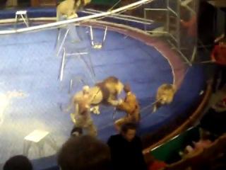 Во Львовском цирке лев напал на дрессировщика во время представления.  Как сообщили в управлении МЧС...