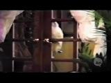 Как кот открывал дверь